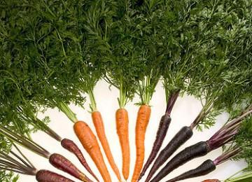 l'Alpha-carotène : vivre plus longtemps en mangeant des carottes